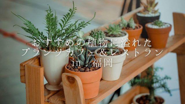 福岡植物カフェ